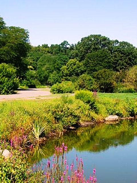 Arnold_Arboretum