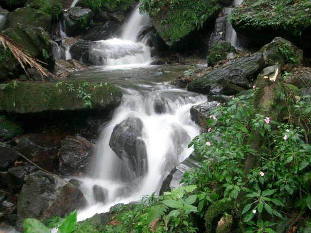 el yunque rainforest2
