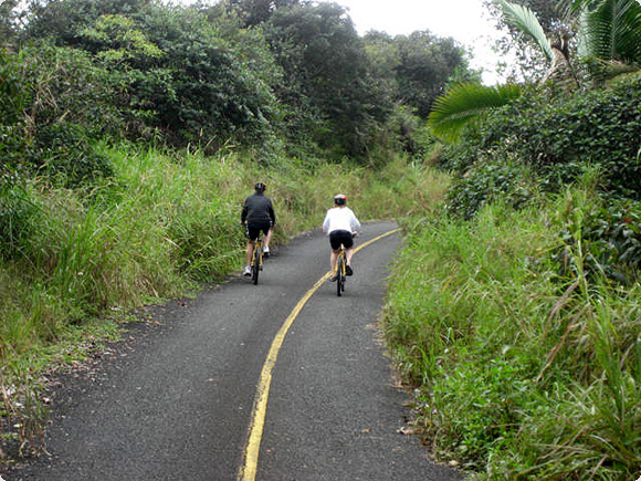ride in the rainforest